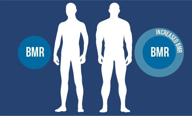 уровень базального метаболизма